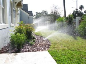 lawn thriving thanks to our Sacramento irrigation specialists
